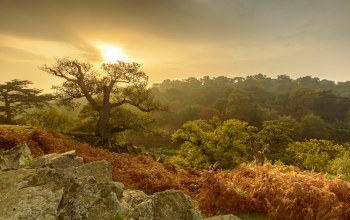 Bradgate Park,Leicestershire,Charnwood Forest,Лестершир,england,осень
