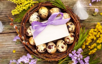 перья,decoration,Easter,гнездо,happy,spring,eggs,цветы