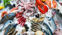 Different types of seafood,white meats,ice