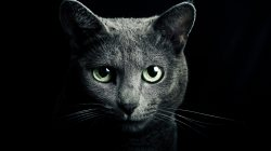 fur,look,green eyes,darkness