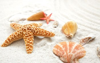 starfish,beach,summer,paradise,sand,shore,Seashells,ракушки,blue