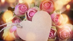 Valentine`s day,roses,heart