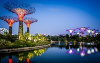 Залив,дизайн,сады,gardens by the bay,Вода,кусты
