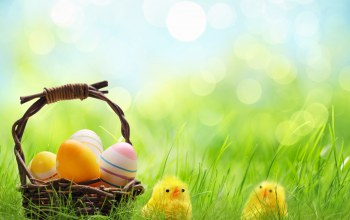 basket,Holidays,wicker,яйца,цыплята,Весна,chickens,eggs,spring,Easter,корзина