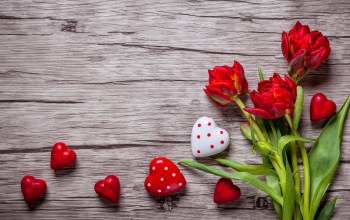 tulips,Valentine`s day,Red,sweet