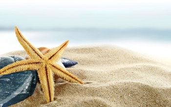 sand,blue,summer,starfish,Seashells,ракушки,shore,paradise,beach