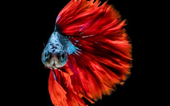 colors,fish,Red,blue,head