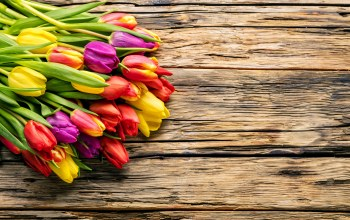 spring,Весна,wood,tulips,colorful,bright,цветы,beautiful
