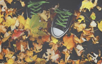 leaves,autumn,all star