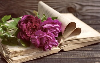 book,пионы,Purple,beautiful,peony,wood,vintage