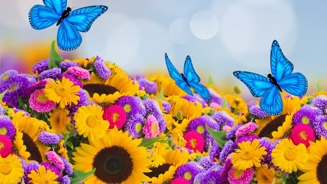астры,colorful,Весна,beautiful,Butterfly