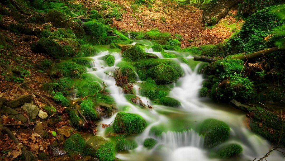 forest,river,stream,water,scenery