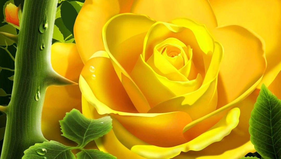 flower,yellow,rose