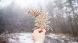 snow,winter,fern,covered
