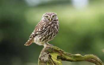 branch,Owl,dry,cute
