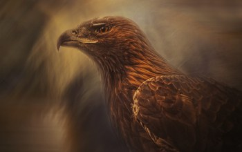 painting,eagle