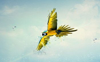 yellow,parrot,born,fly