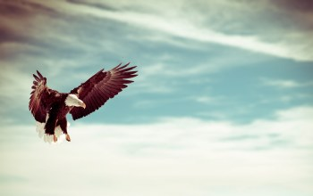 flying,eagle