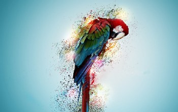 parrot,beautiful,wallpaer
