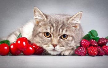 fruits,close,cat,brown