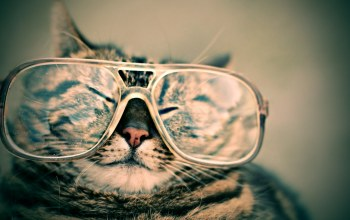 funny,glasses,cat