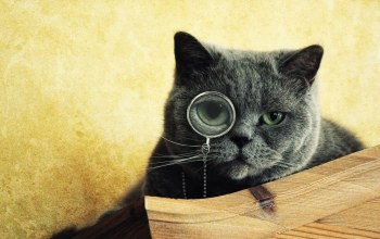 Cats,glasses,monocle