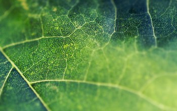 leaf,network,Vines
