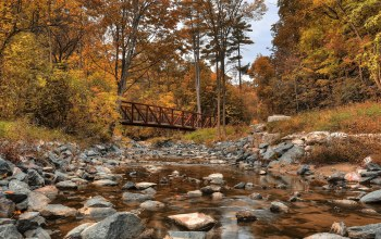 river,forest,autumn,bridge,landscape