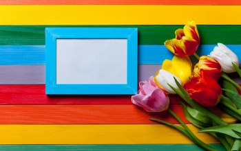 colors,tulips,colorful,rainbow,цветы