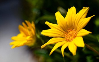 flower,yellow,photography