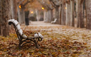bench,leaves,autumn,fallen,park