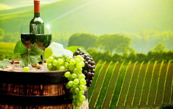 wine,bordeaux,Grapes