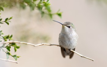 close,hummingbird,tree,branch