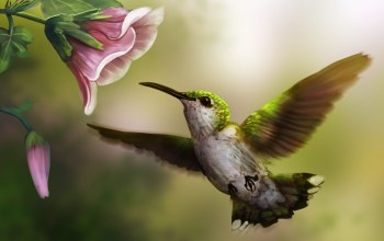 hummingbird,painting