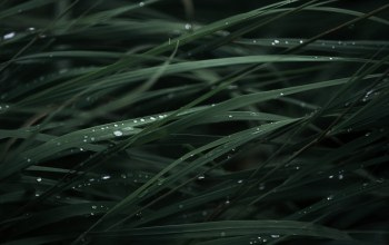 drops,grass,dew