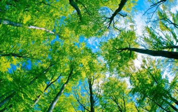 forest,tree,canopy