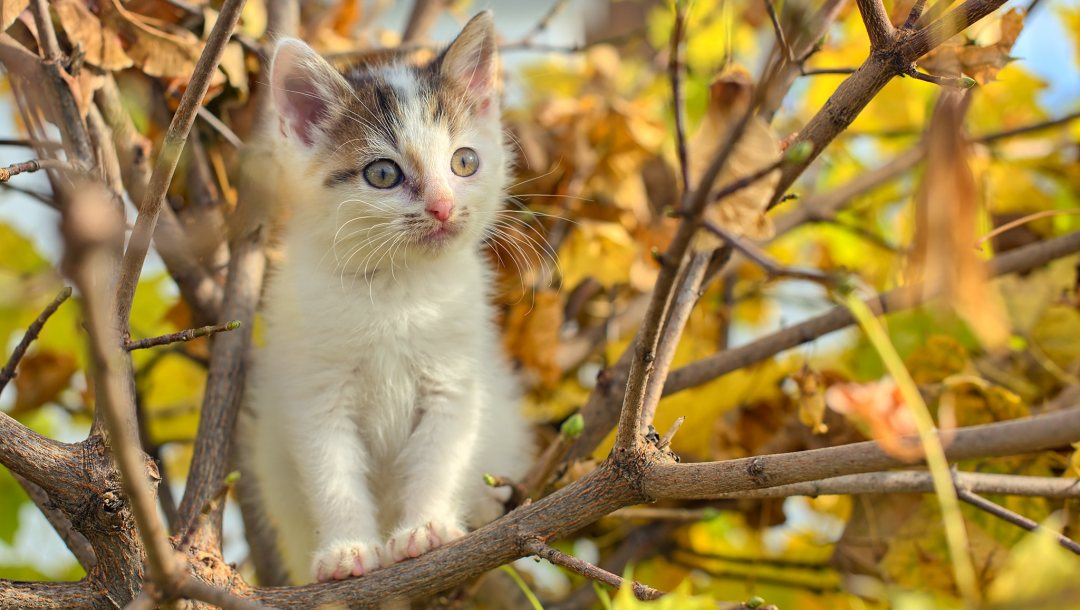 tree,cat,foliage,buds,autumn,puppy,branches