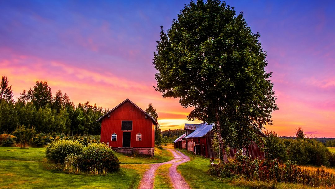 trees,house,the,Road,grass