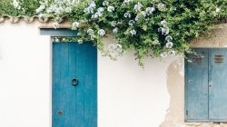 цветы,стена,wall,flowers,Door,Дверь