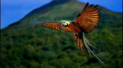 parrot,macaw,flying