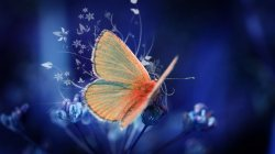 blue,background,Butterfly