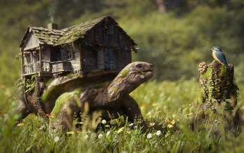 graphics,animals,house,turtle,the