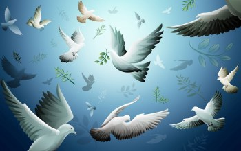 Birds,flying,Dove