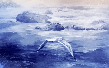 seagull,painting