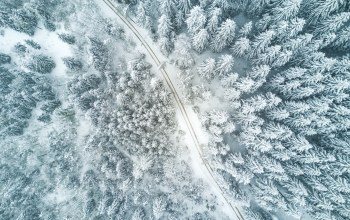 путь,tree,елка,Road,forest,winter,way