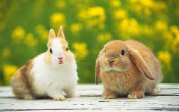 cute,Rabbits