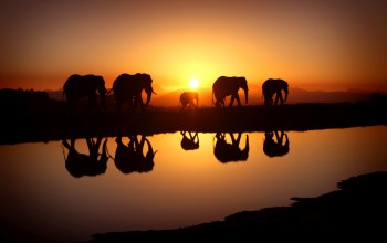 savana,Sunset,elephants,family