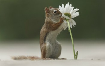 cute,flower,squirrel