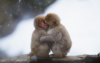 cute,snow,hug,monkey