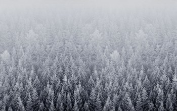 forest,default,mac,snow,ios